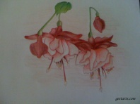Flowers using Color Pencils by Niharika