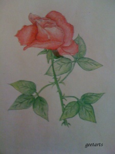 Rose using color pencil - Jahnavi C